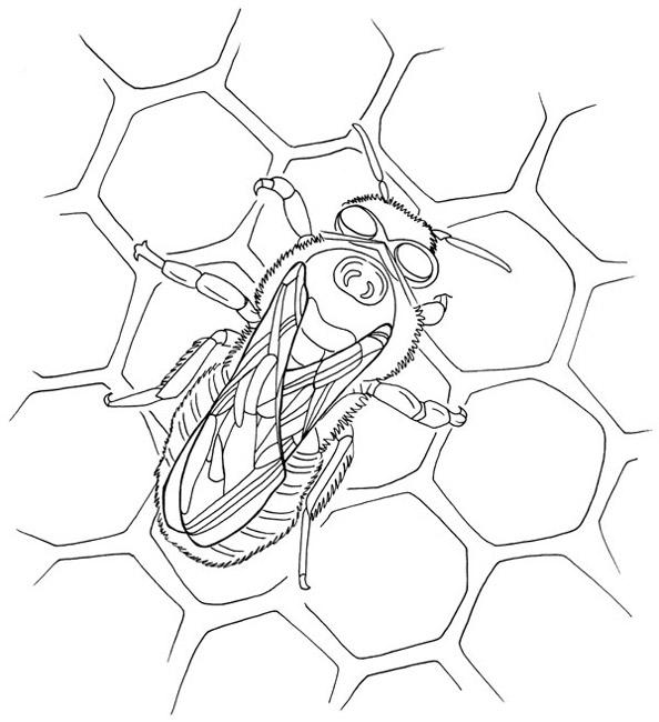 Dessin colorier abeille et ruche - Dessin de ruche d abeille ...