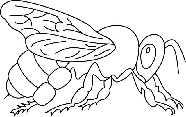 Colorier abeille - Abeille coloriage ...
