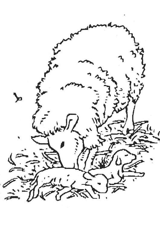 coloriage a imprimer agneau