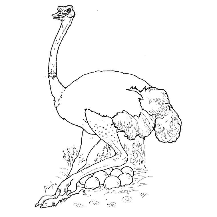 92 dessins de coloriage animaux imprimer gratuit imprimer - Animaux dessin images ...
