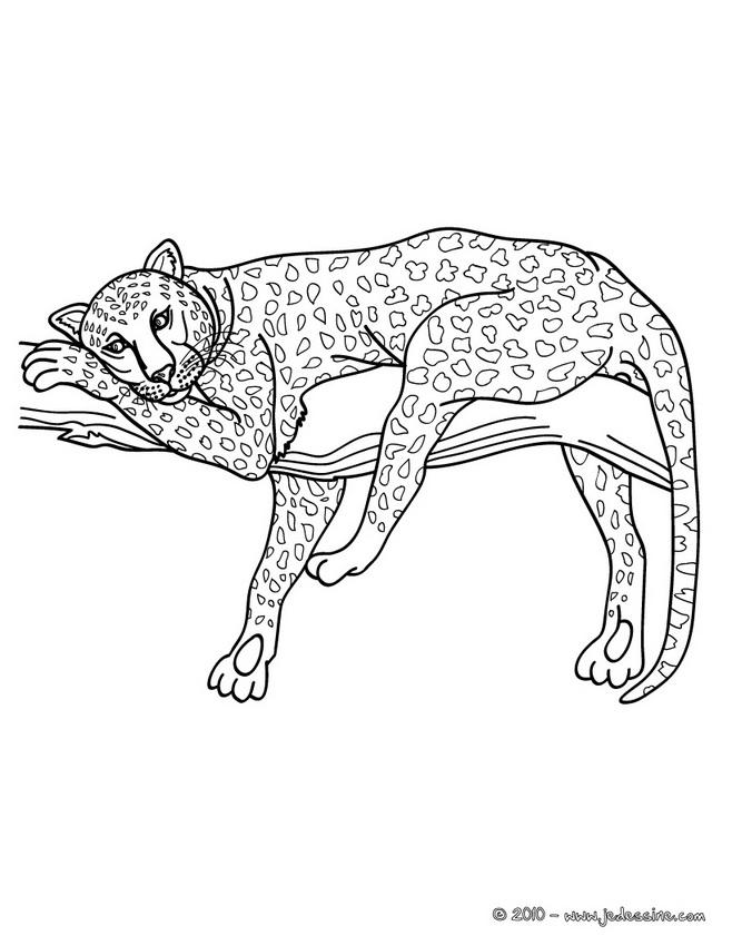 95 dessins de coloriage animaux d 39 afrique imprimer. Black Bedroom Furniture Sets. Home Design Ideas