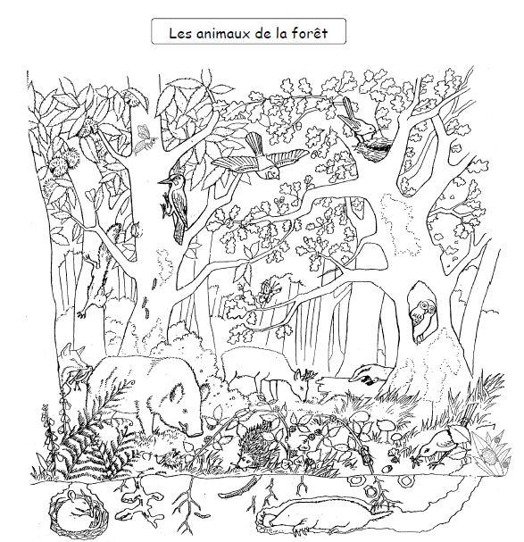 98 dessins de coloriage animaux de la foret imprimer - Coloriage animaux zoo ...