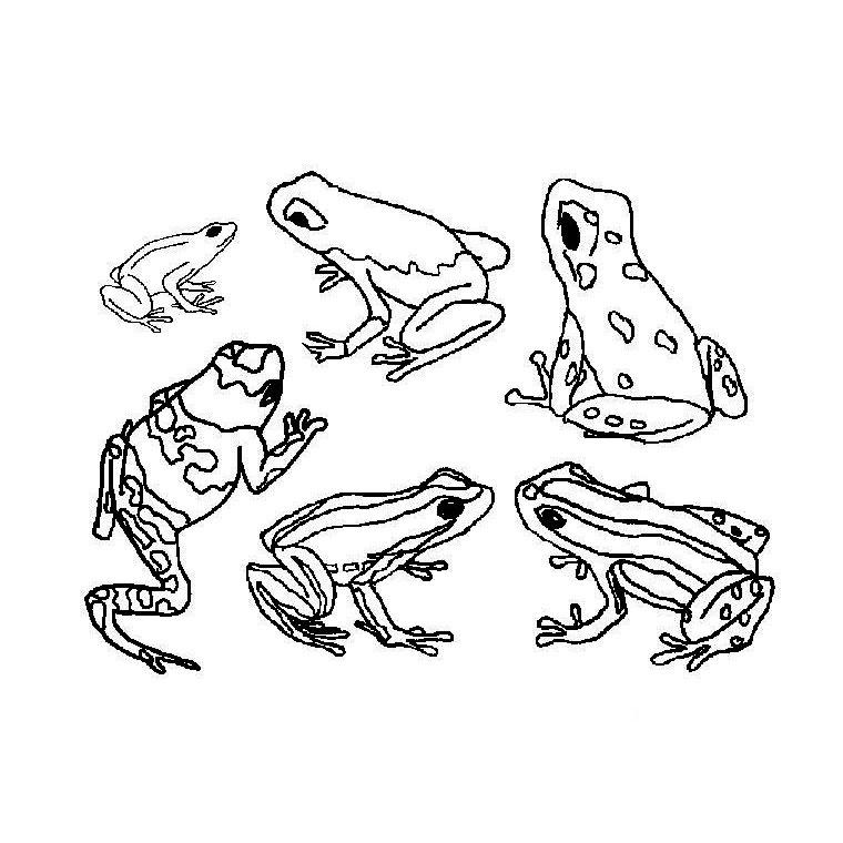 98 dessins de coloriage animaux de la foret imprimer - Animaux dessin images ...
