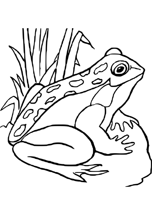 coloriage animaux zoo petite section