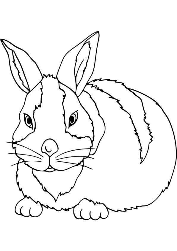 coloriage animaux savane à imprimer