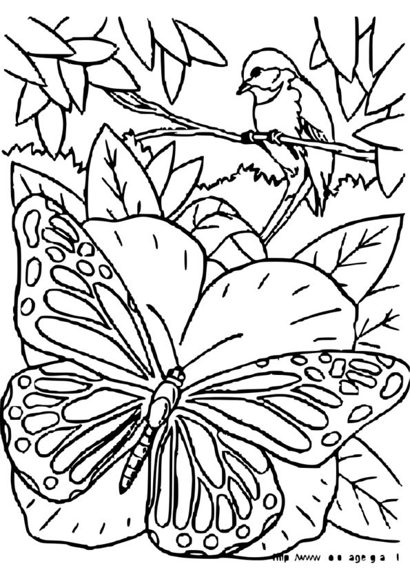 coloriage animaux roule galette