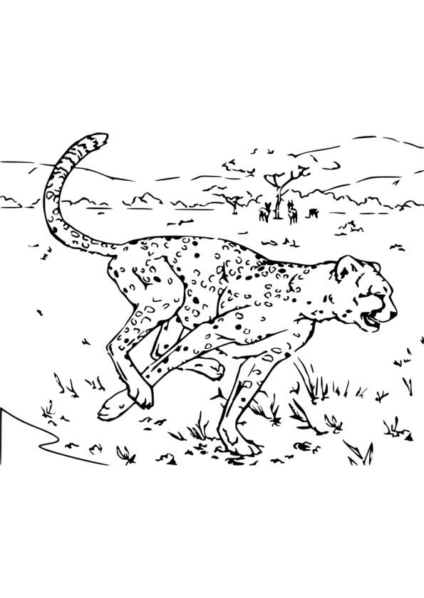 coloriage animaux lion imprimer