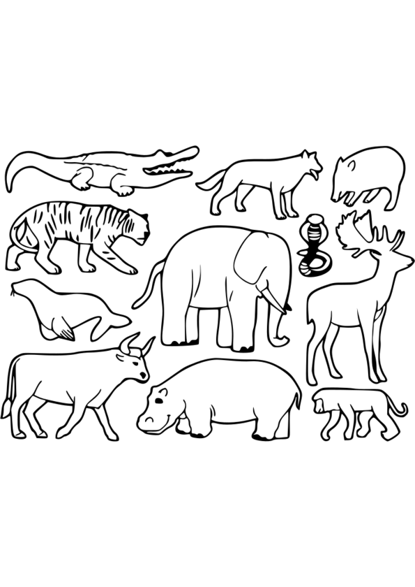 coloriage animaux pdf