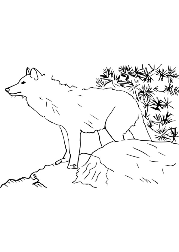 Super 145 dessins de coloriage Animaux à imprimer US65