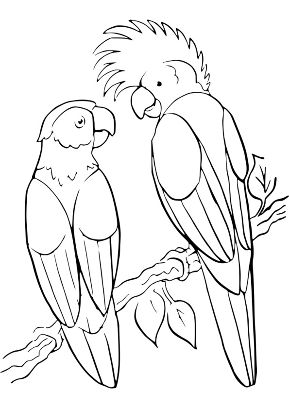 coloriage animaux humoristiques