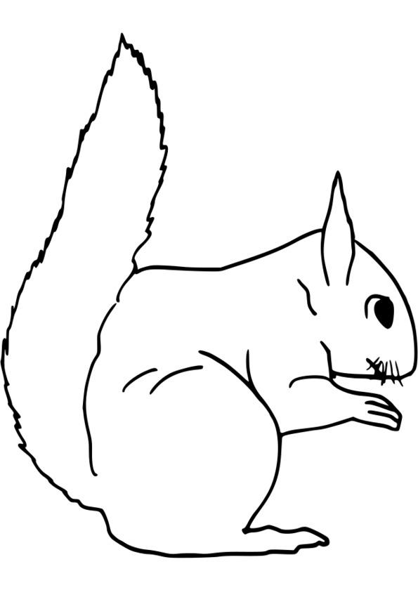 jeu coloriage animaux gratuit voir le dessin - Dessin D Animaux