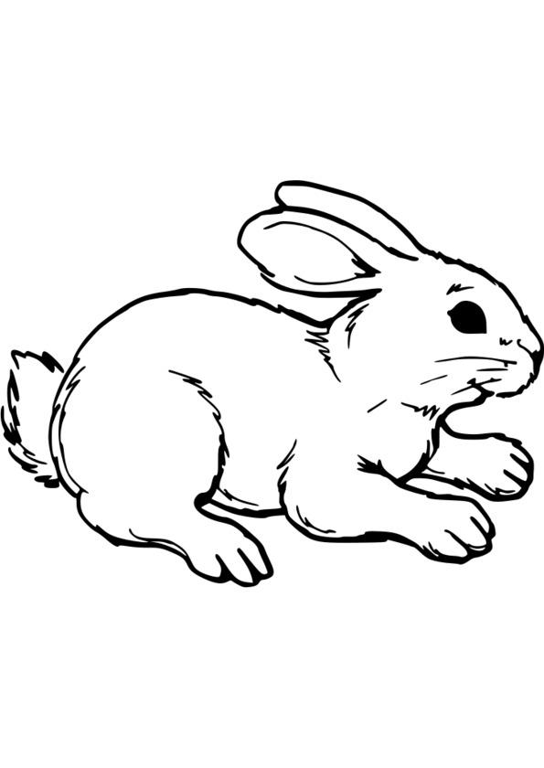 dessin magique difficile animaux