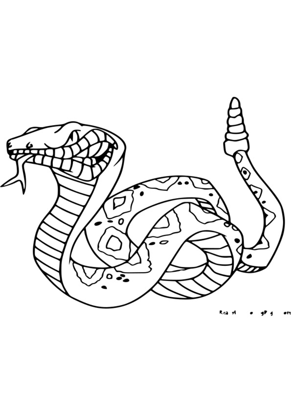 coloriage � dessiner animaux sauvage a imprimer