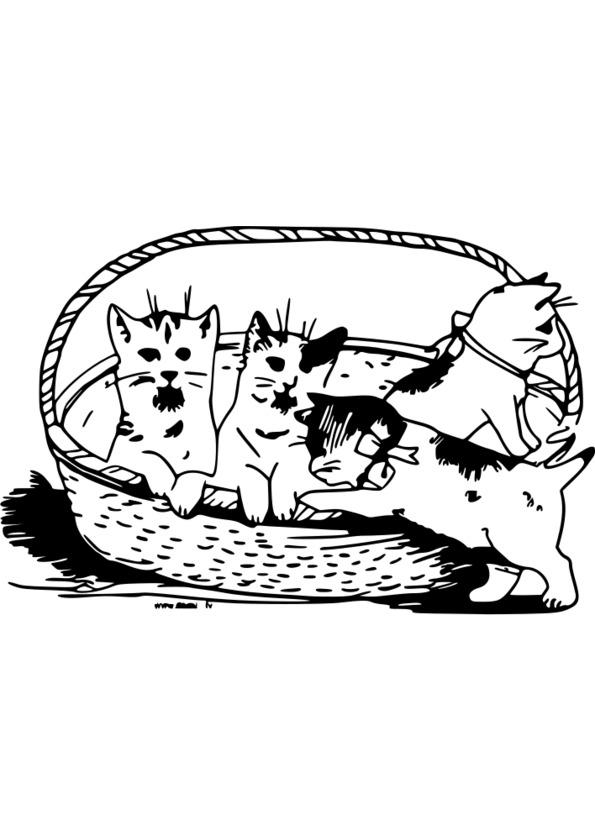 coloriage à dessiner animaux australie
