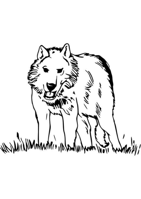 dessin mandala � imprimer animaux