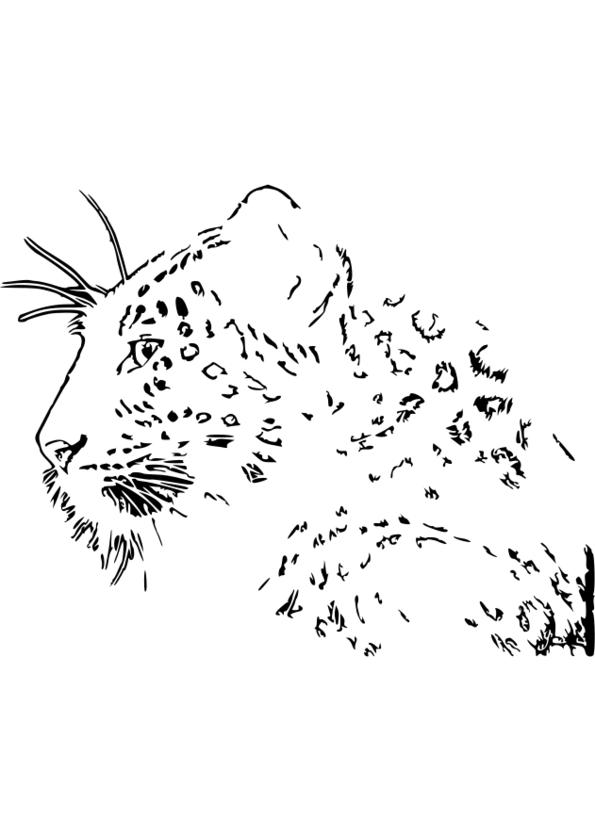 dessin animaux de la mer