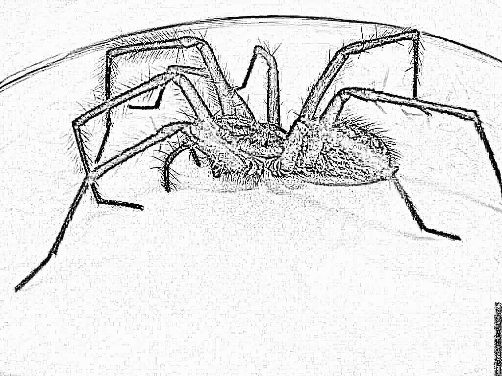 97 dessins de coloriage araign e gratuit imprimer - Dessin gratuits ...