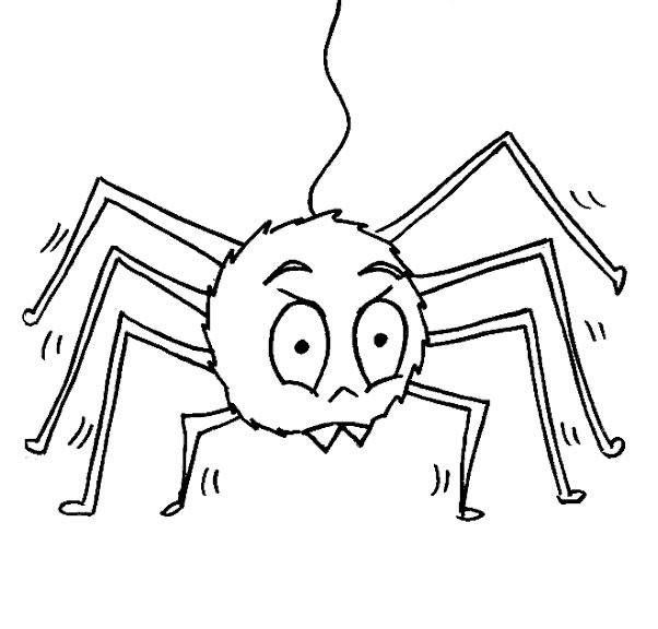 coloriage gratuit araignee