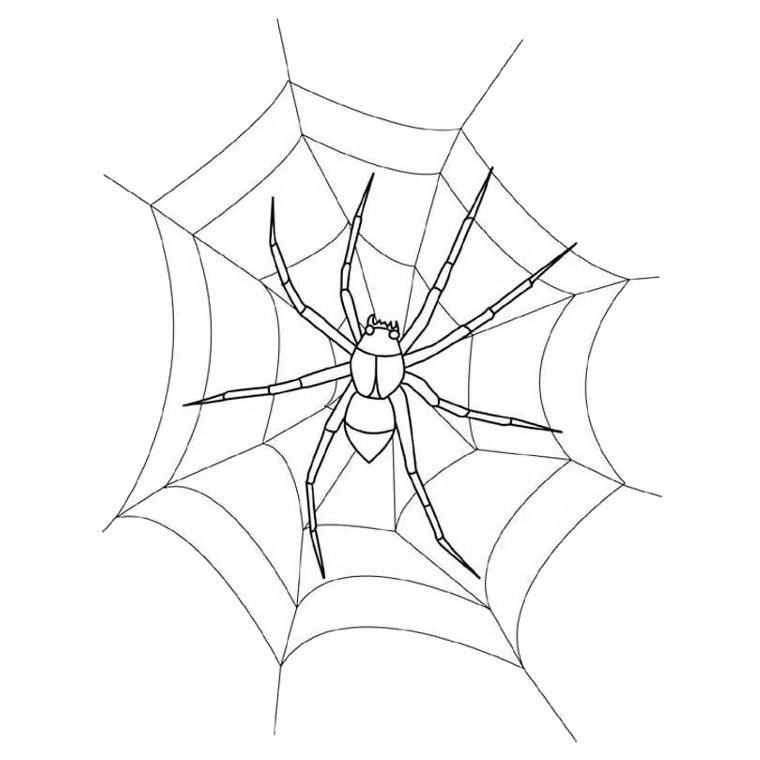 dessin gratuit araignee