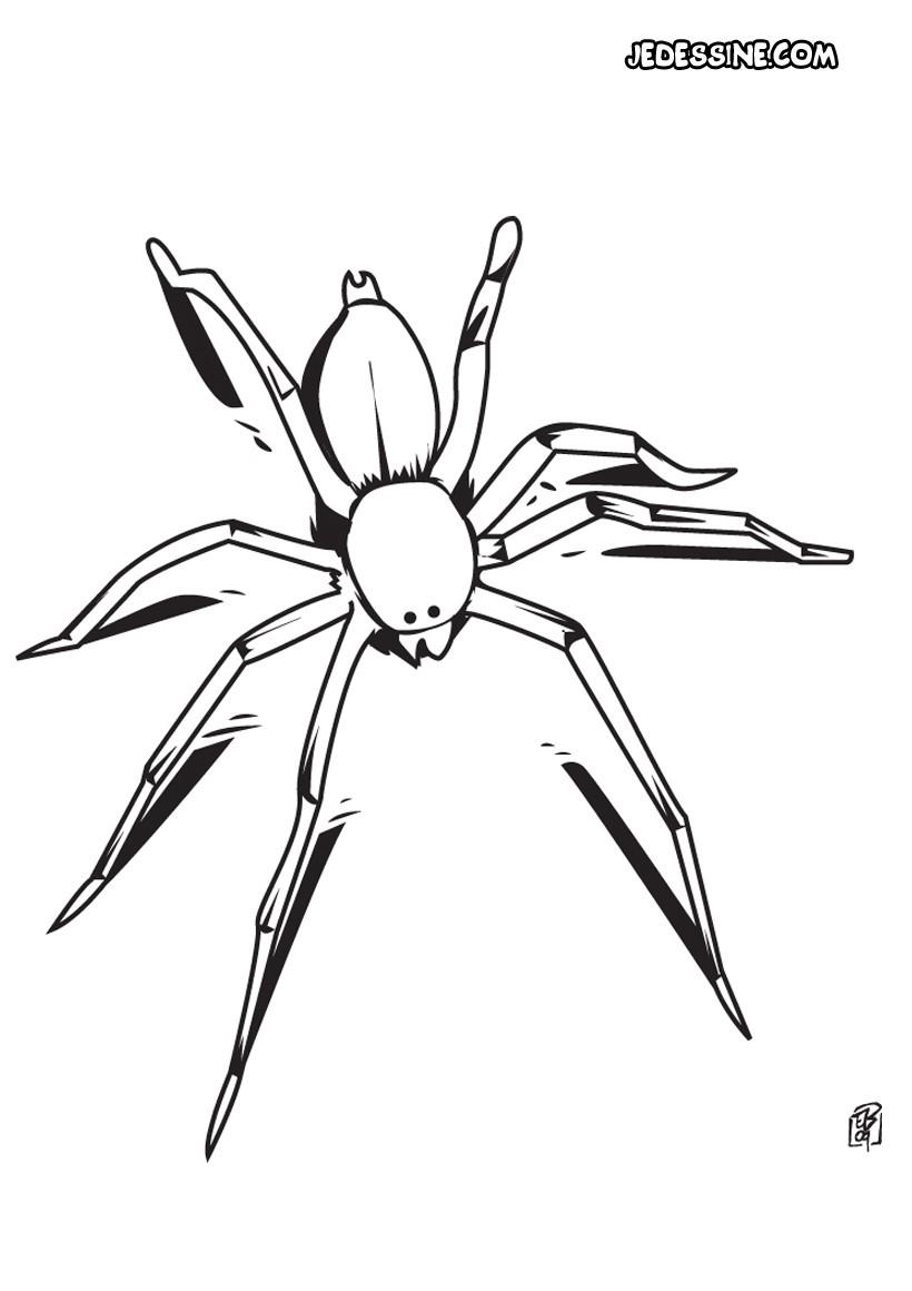coloriage à dessiner araignée gratuit