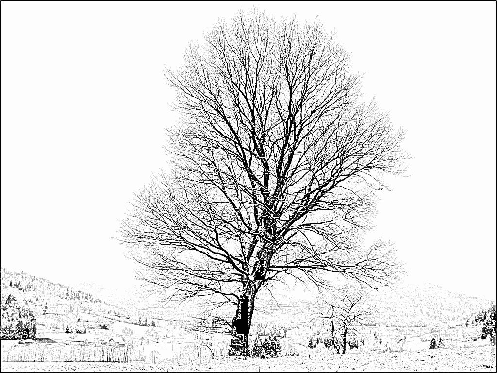 Dessin arbre automne coloriage - Arbre d automne dessin ...
