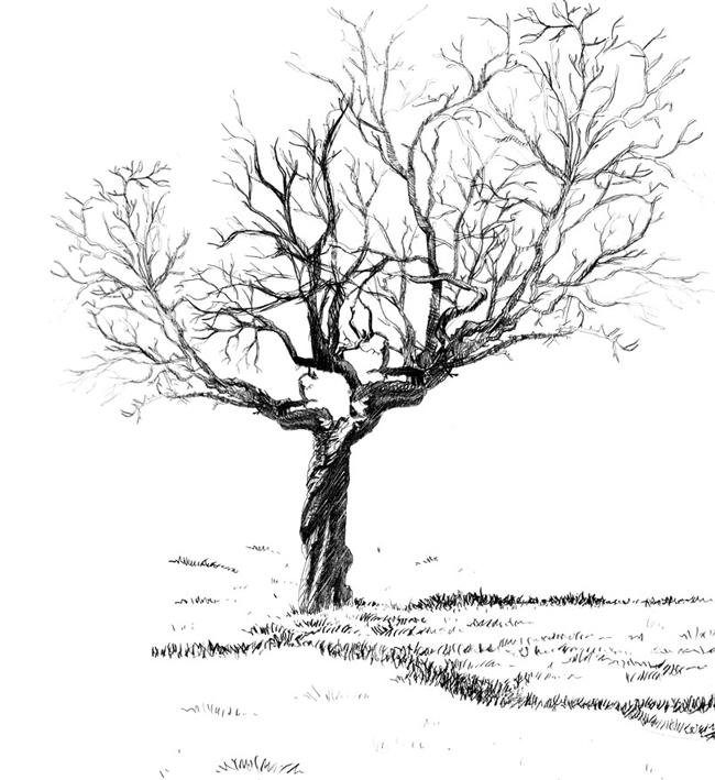 Dessins arbre de vie - Arbres dessins ...