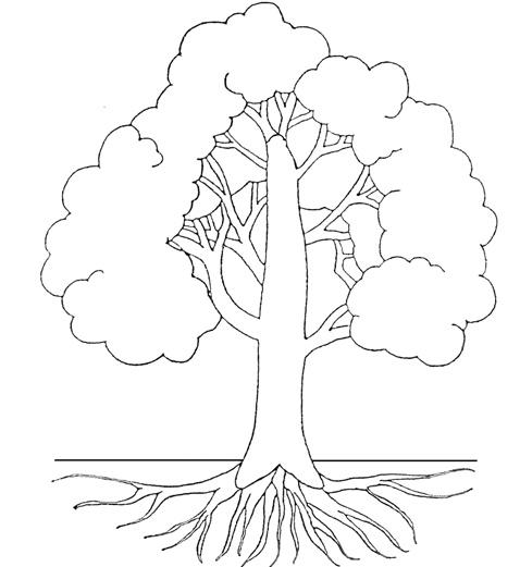 Comment Dessiner Un Arbre De Foret Tropicale Humide Fiche