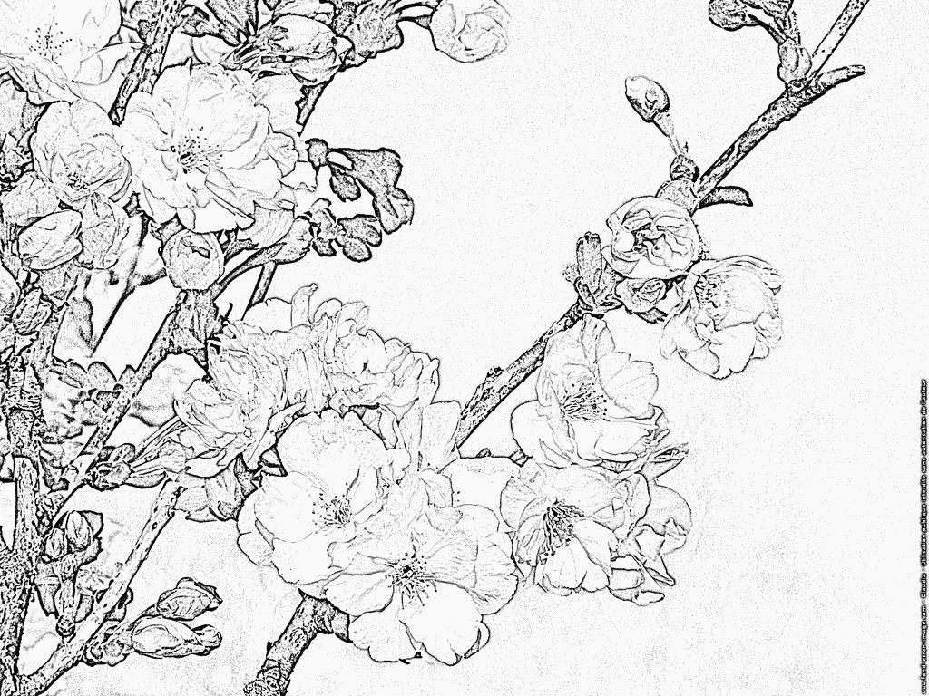 97 dessins de coloriage arbre printemps imprimer - Dessin de printemps a imprimer ...