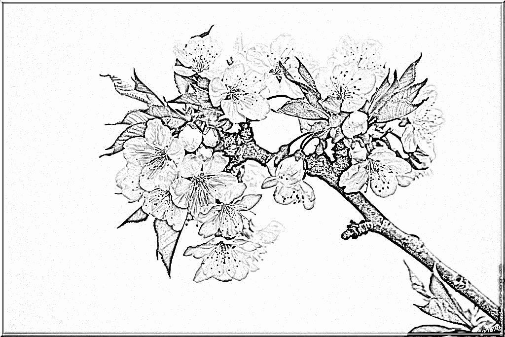 97 dessins de coloriage arbre printemps imprimer - Branche arbre dessin ...