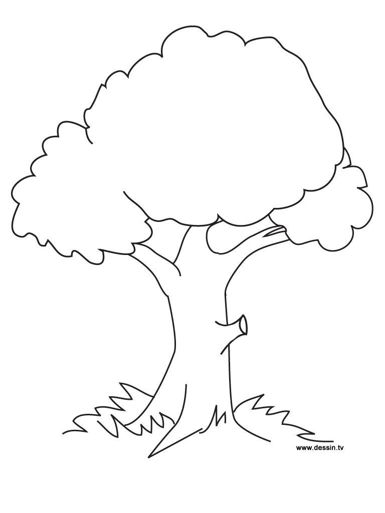 coloriage arbre fruitier imprimer