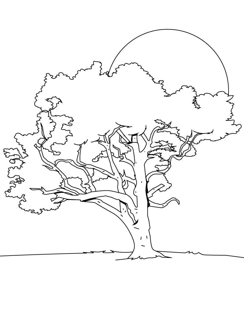 Coloriage arbre baobab - Arbre coloriage ...