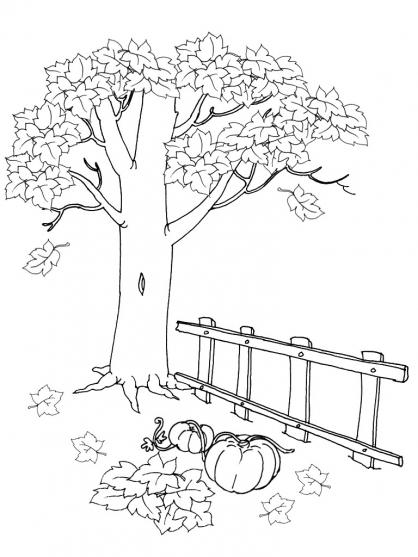 coloriage d'automne forêt