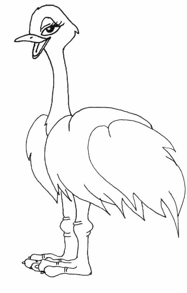 dessin d'une autruche