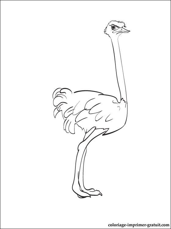 dessin à colorier d'une autruche