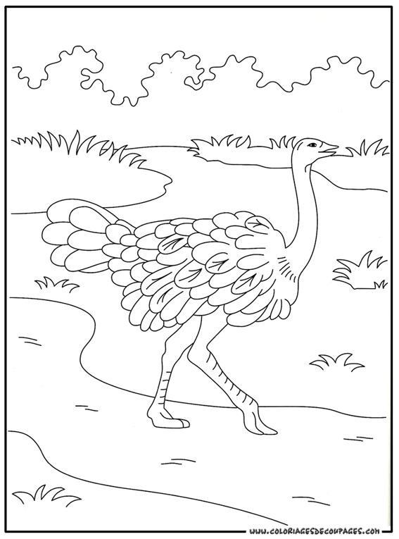 Dessin d 39 autruche imprimer - Autruche dessin ...