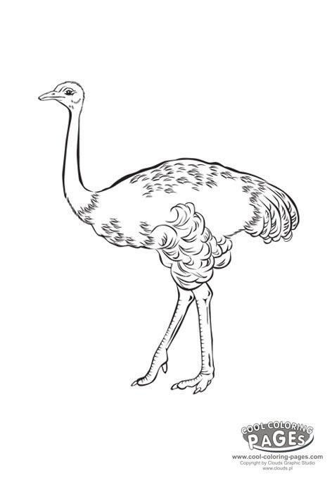 dessin à colorier autruche à imprimer
