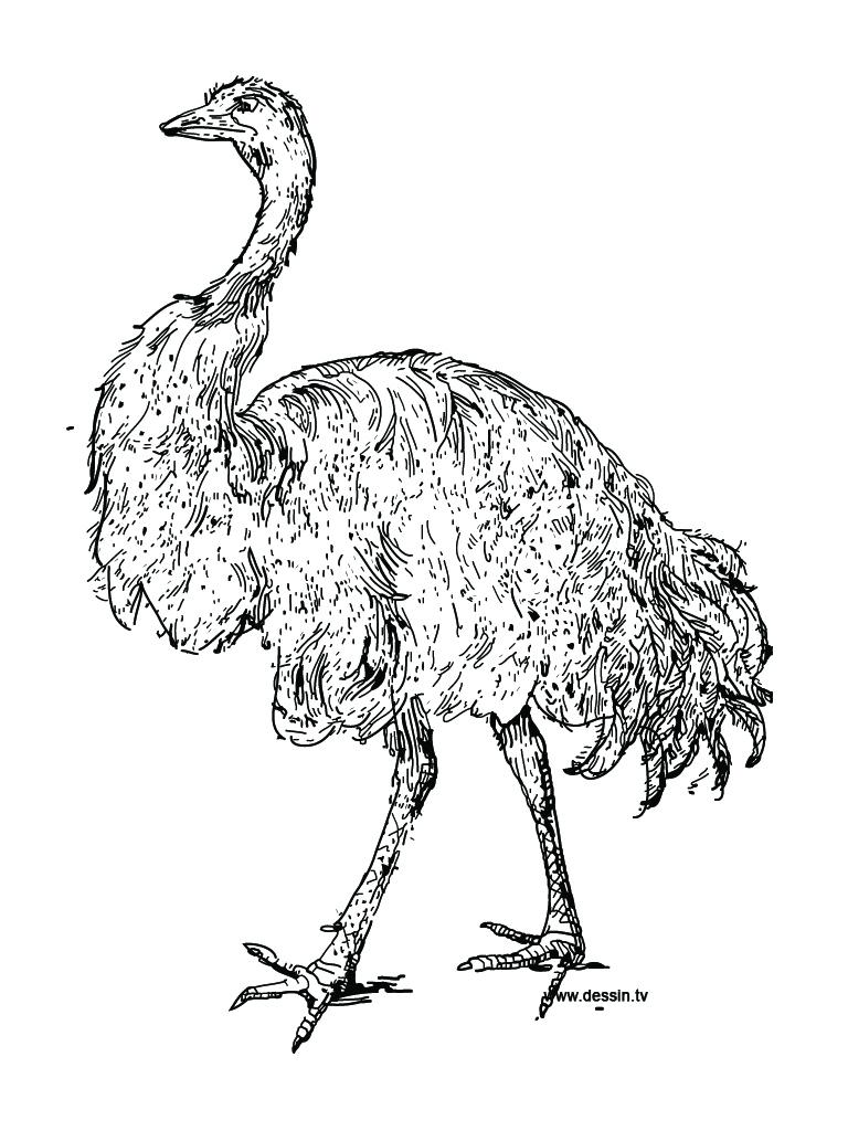 dessin en ligne autruche