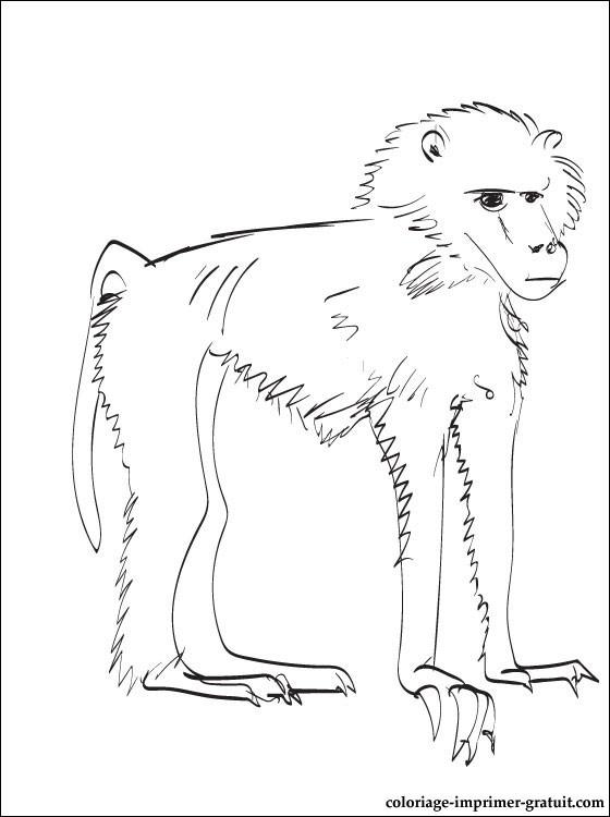 dessin � colorier de babouin
