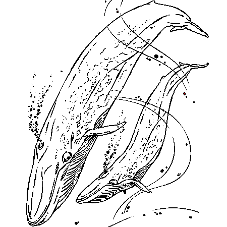 dessin à colorier à imprimer baleine