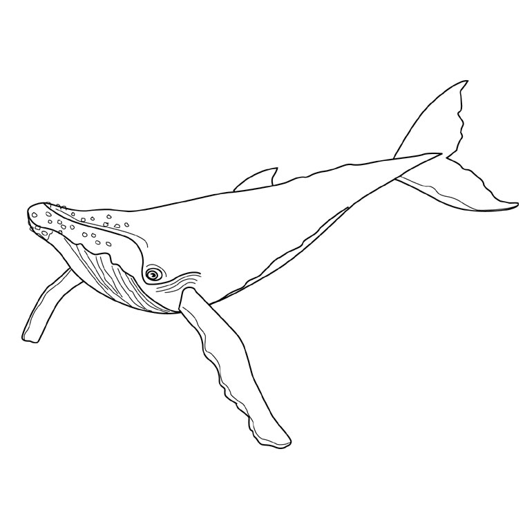 dessin requin baleine imprimer