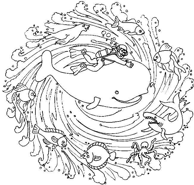 dessin requin baleine coloriage à dessiner