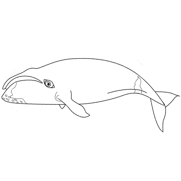 coloriage à dessiner en ligne gratuit baleine