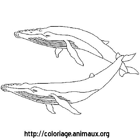 dessin coloriage � dessiner baleine