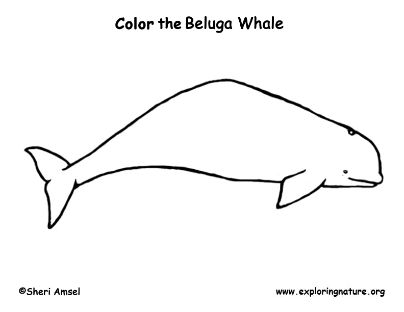 dessin avion beluga