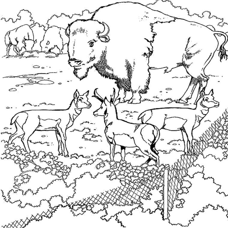 dessin � colorier bison et indien