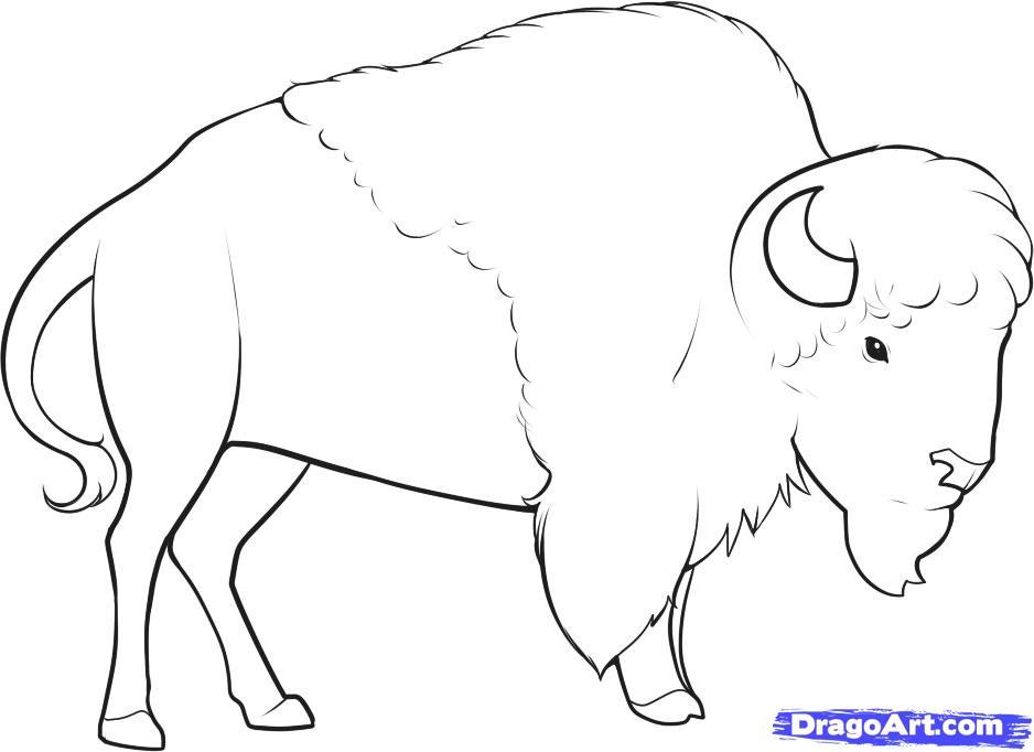 dessin à colorier gratuit bison
