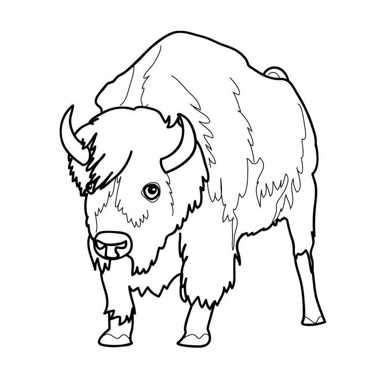 coloriage à dessiner d'un bison