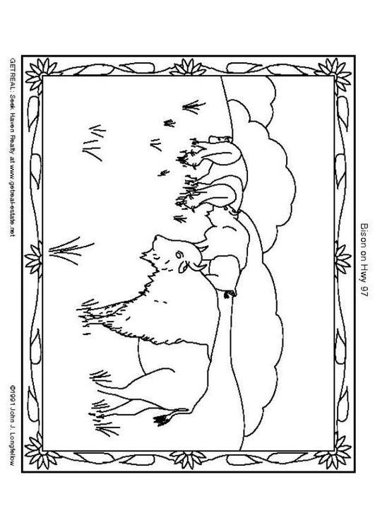 dessin bison indien