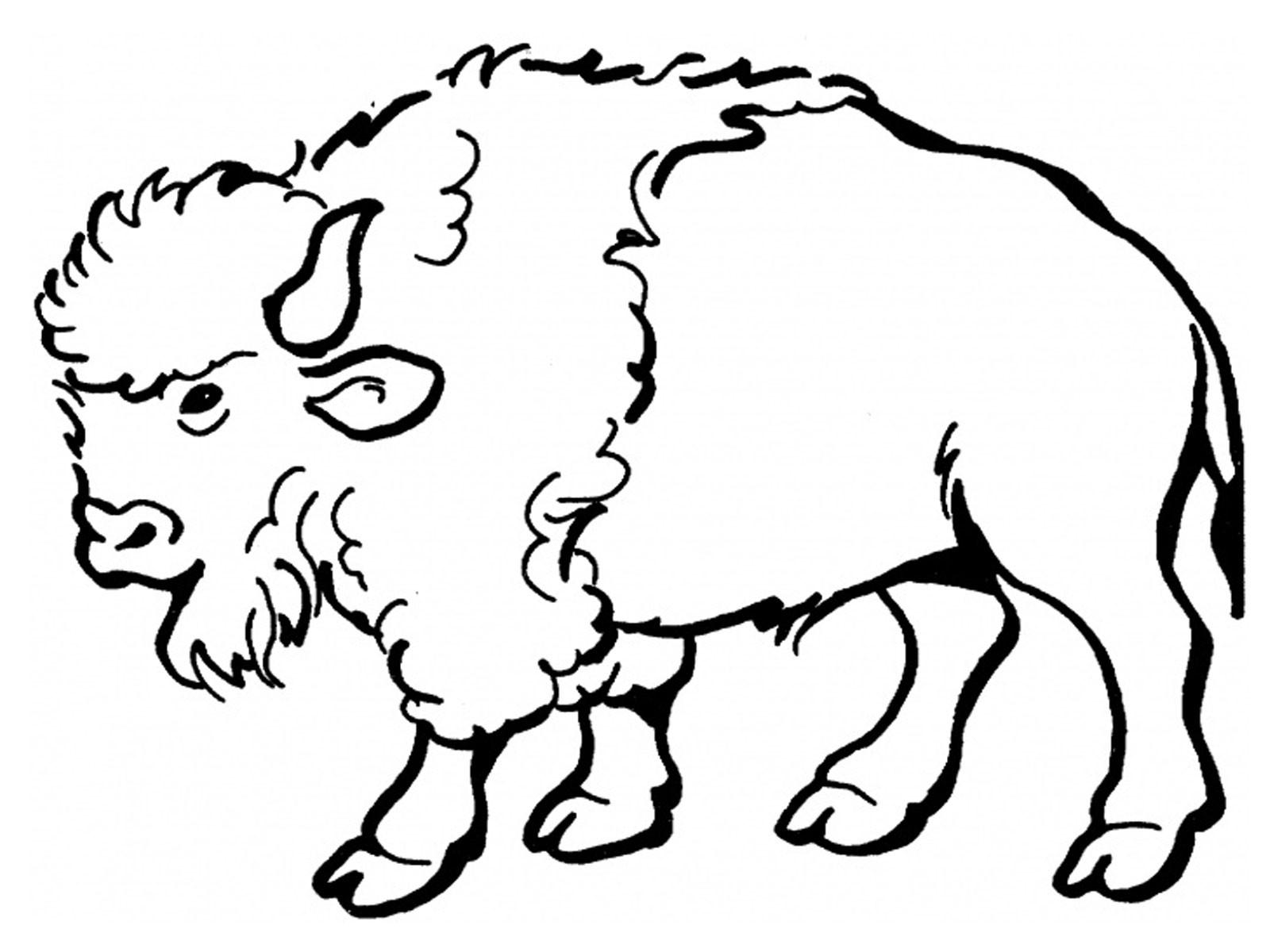 coloriage bison a imprimer gratuit