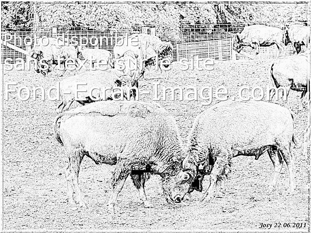 dessin gratuit de bison